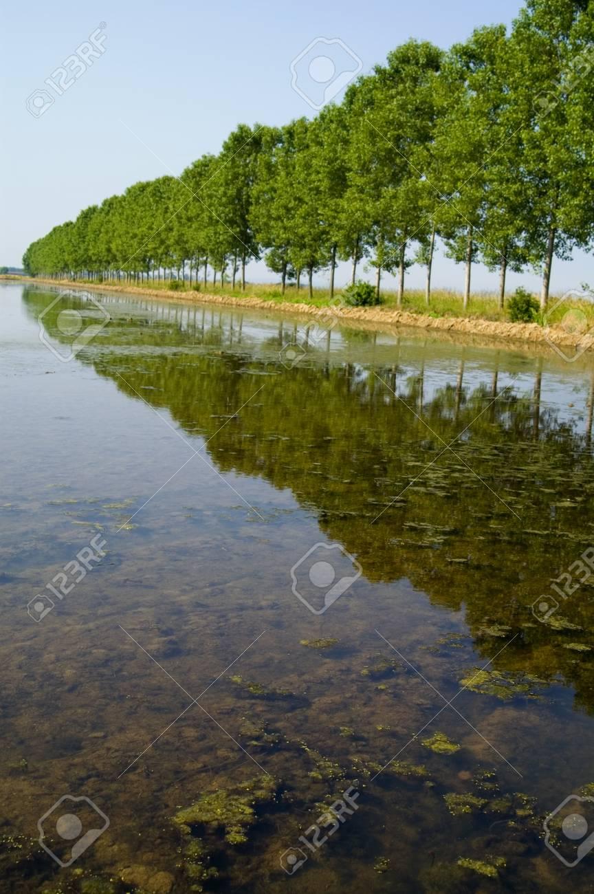 rice fields Stock Photo - 12924521