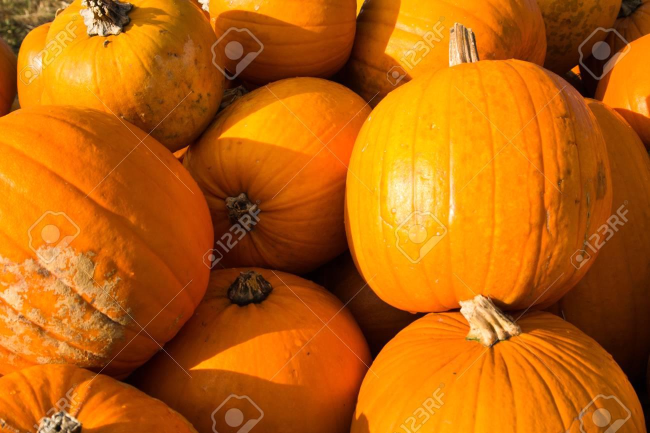 Pumpkin in the open air Stock Photo - 13557810