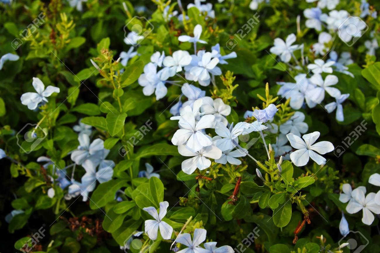 little blue flower Stock Photo - 12980911