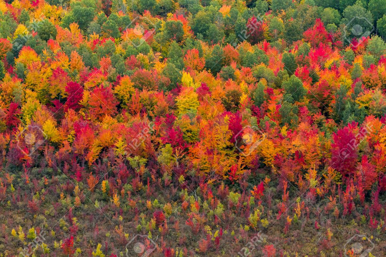 Colorful aerial view of a north american forest at fall. - 66413594
