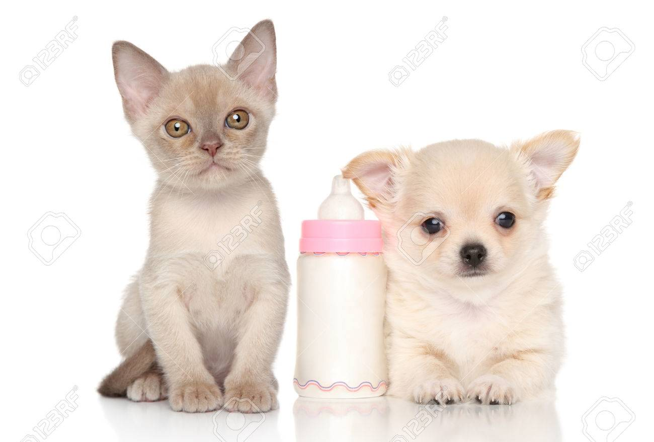 Puppy And Kitten & Stock Royalty Free Puppy And