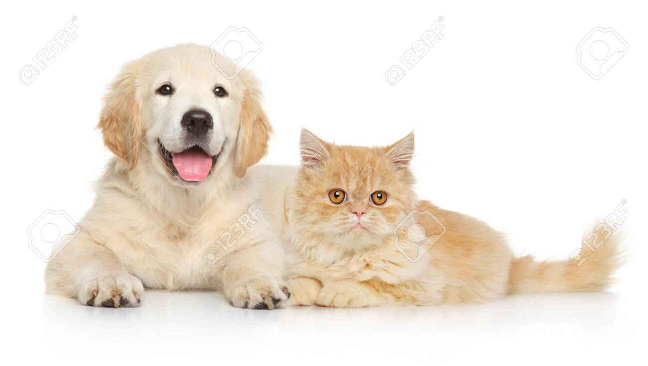Cat and dog together lying on a white background. Animal themes - 124785822