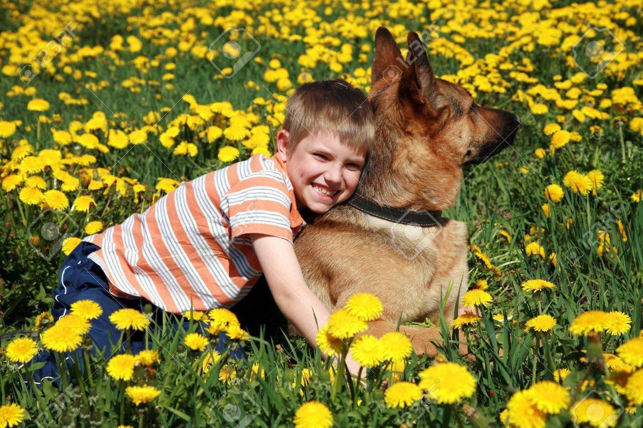 Little blonde boy playing with his large Alsatian dog on the wild meadow all in yellow dandelions during sunny day. Stock Photo - 4863955