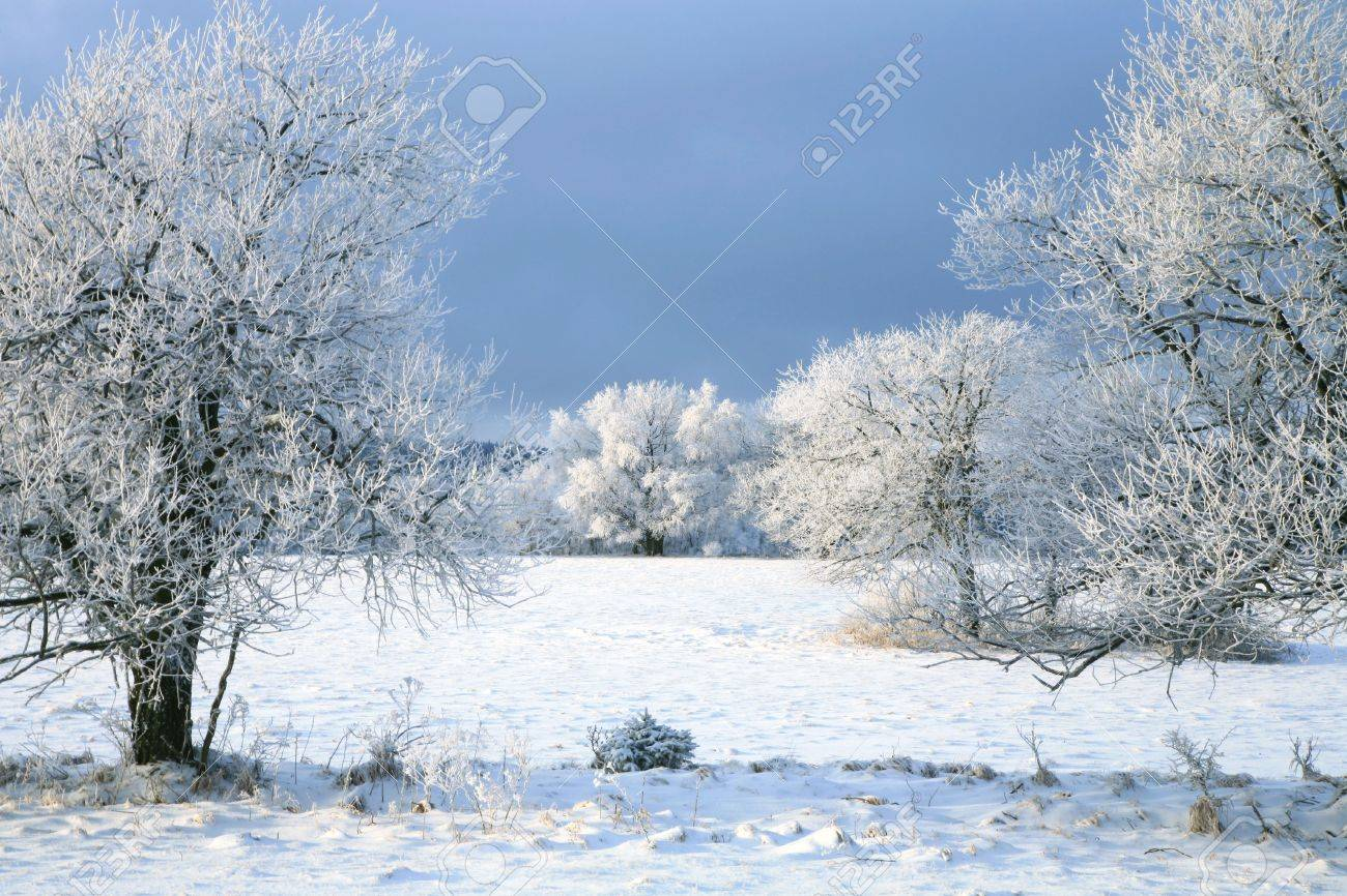 Winter tree, landscape near small, picturesque Pasterka village in Poland. Famous tourist attraction, Table Mountain. Stock Photo - 6176882