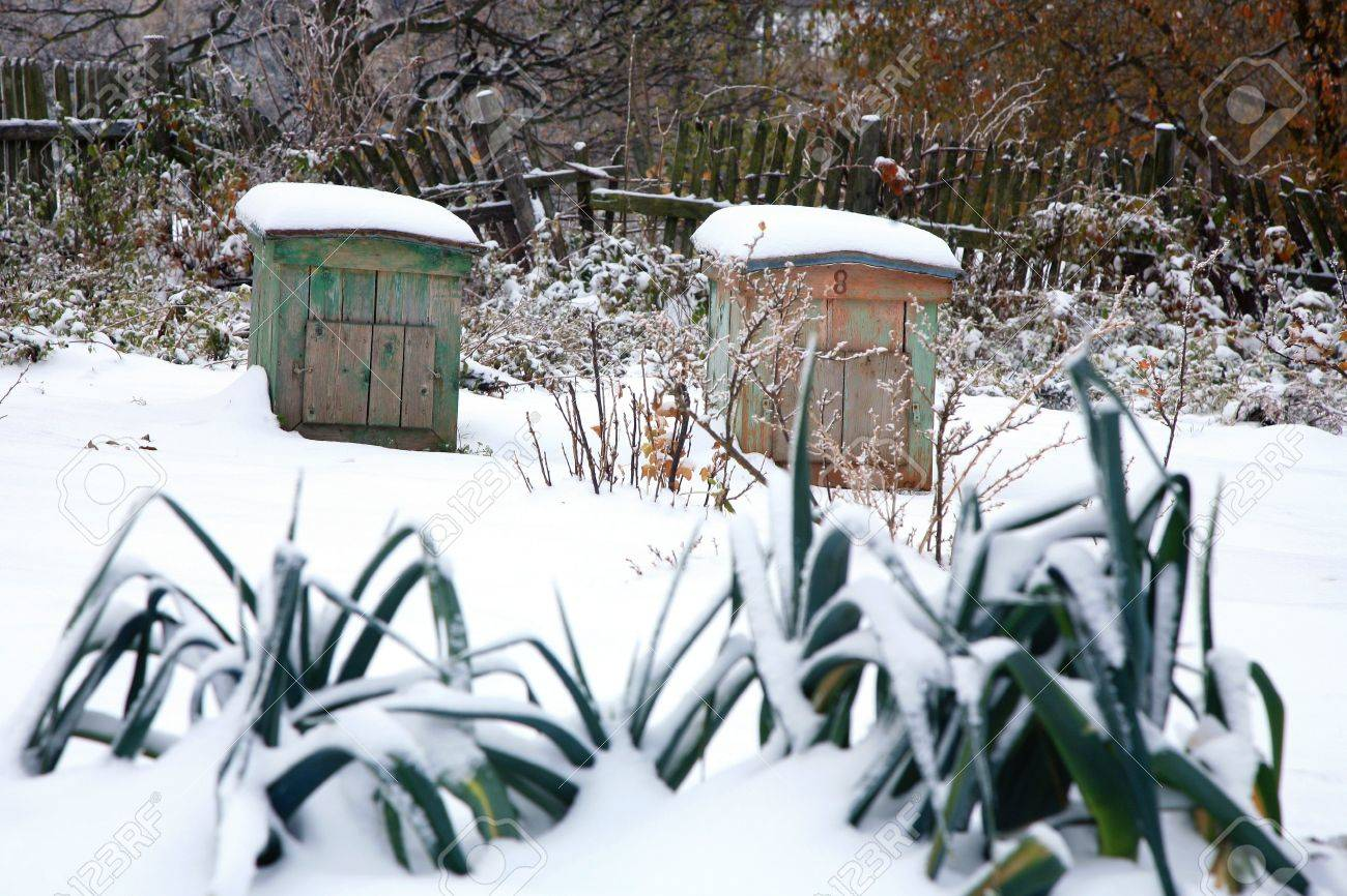 vegetable garden with beehives covered with first snow winter