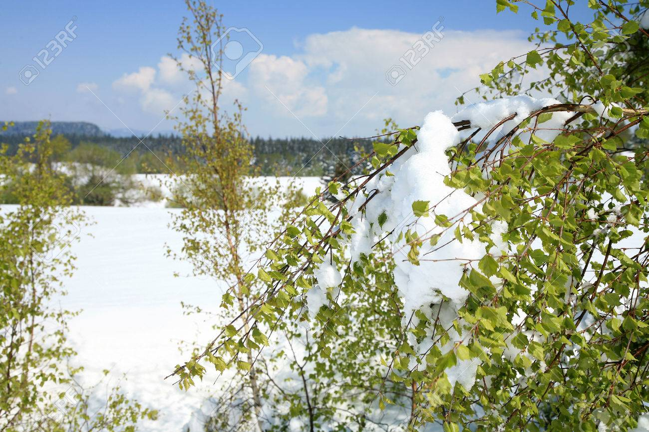 Weather anomalies  Snow in May  Winter in spring Stock Photo - 27625700