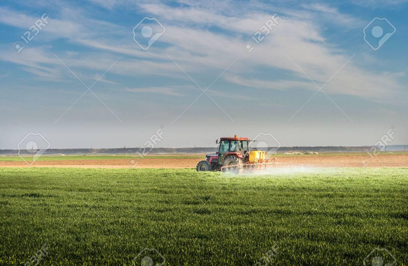 Tractor spraying wheat field with sprayer - 49304596