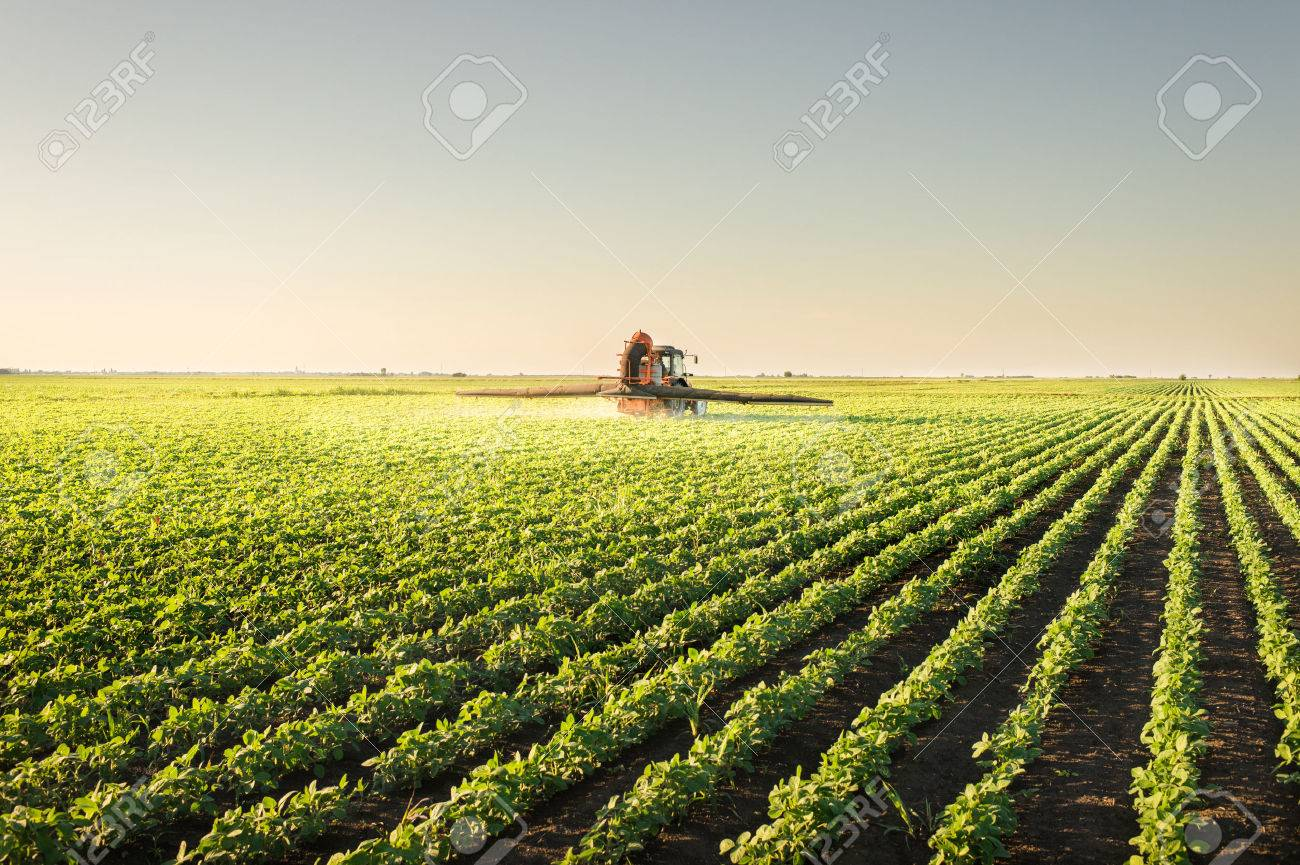 Tractor spraying pesticides on soybean - 49788600