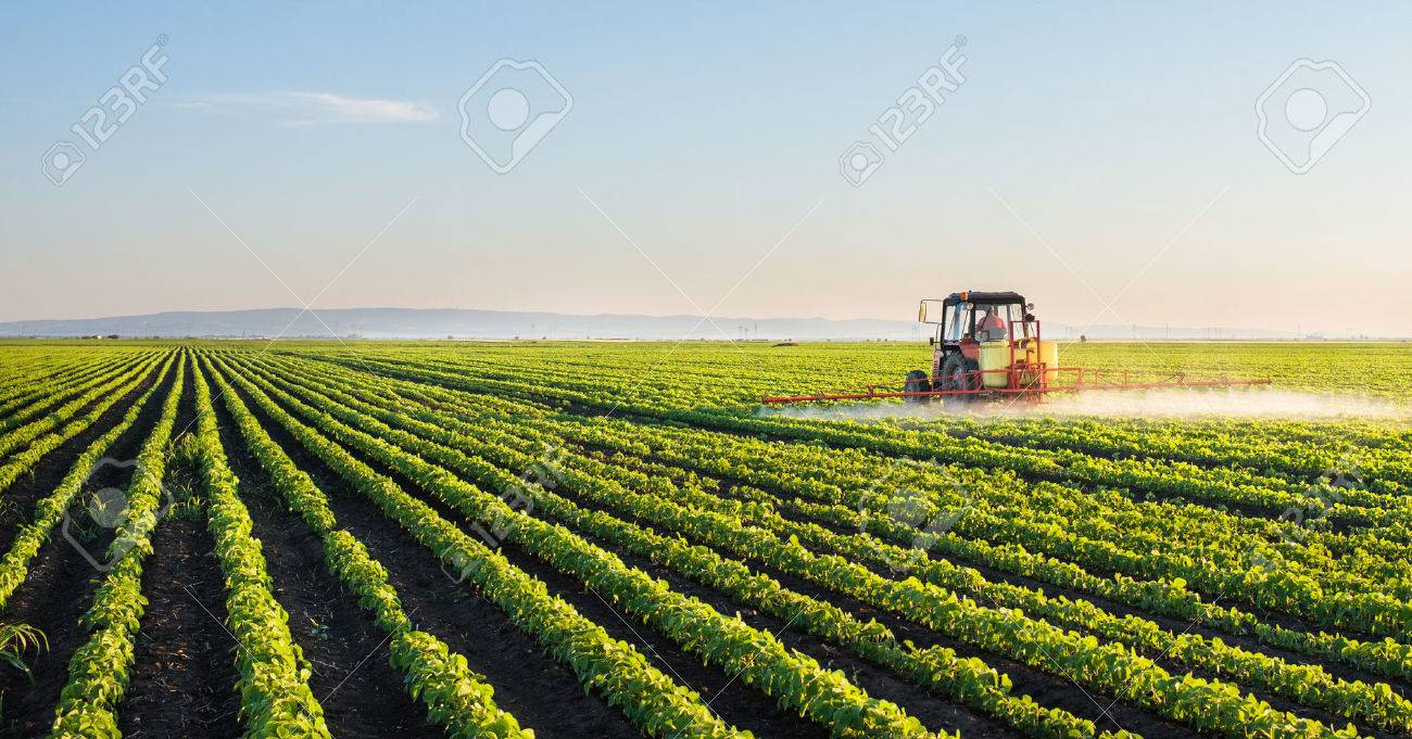 Tractor spraying soybean field at spring - 51080057