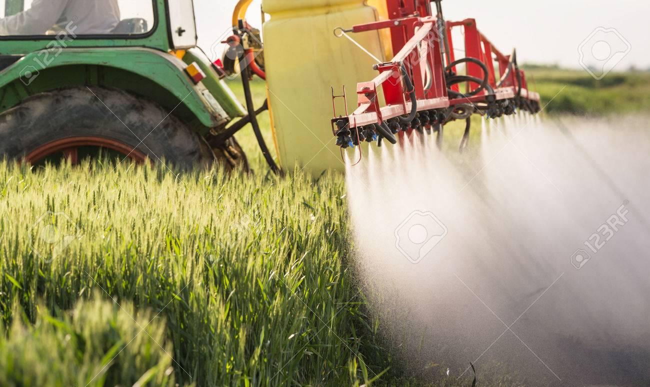 Tractor spraying wheat field with sprayer - 57048116