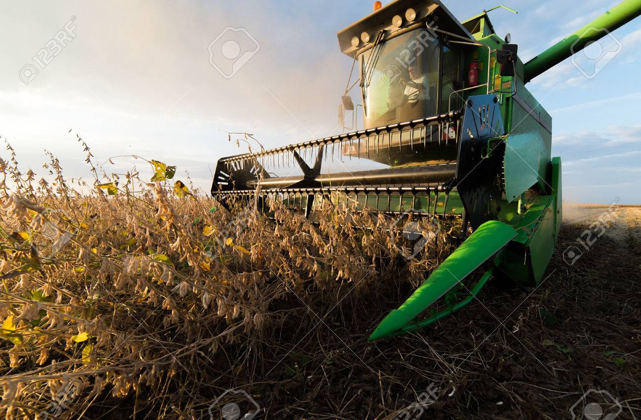 Harvesting of soybean field with combine - 64222447