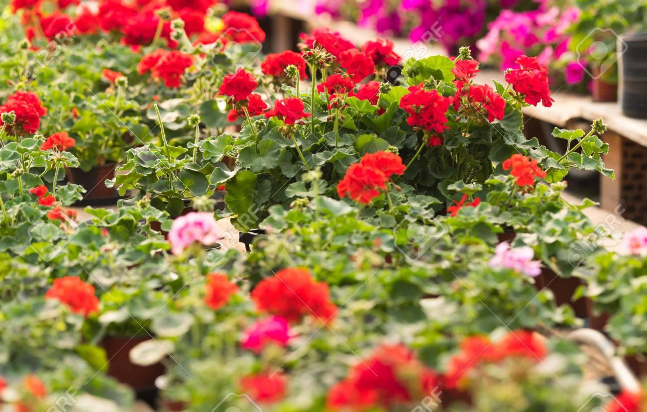 Flore des fleurs à l\'intérieur d\'une serre de jardin