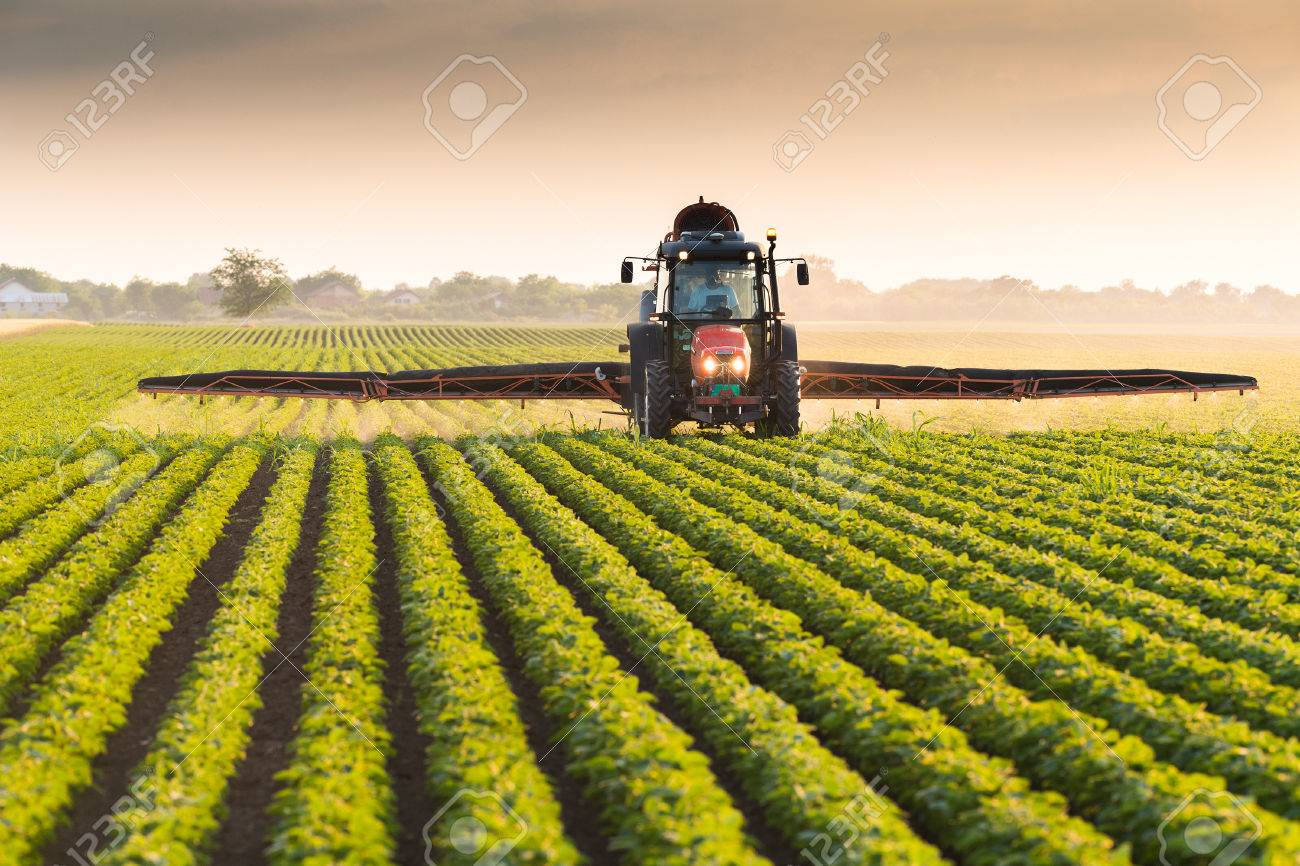 Tractor spraying pesticides on soybean field with sprayer at spring - 79583942