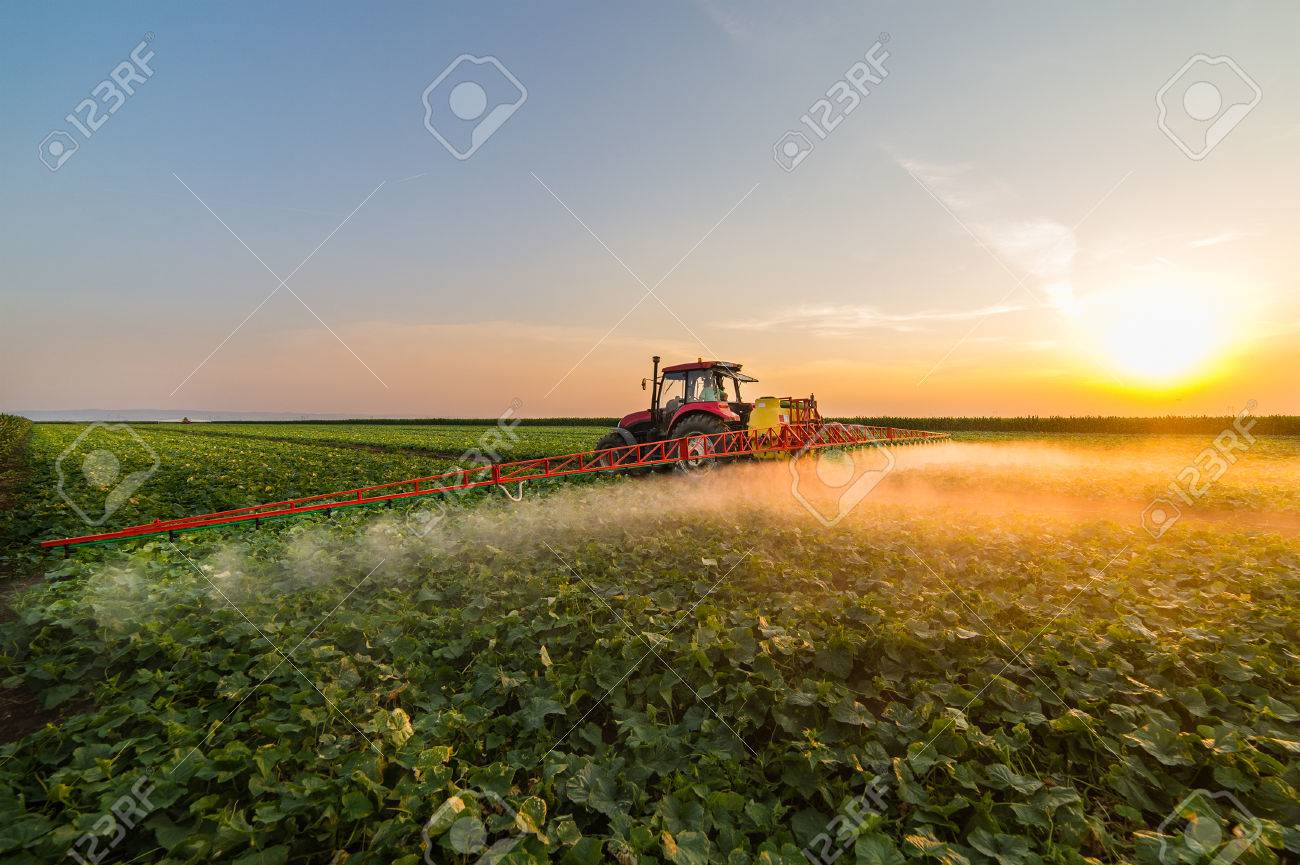 Tractor spraying pesticides on vegetable field with sprayer at spring - 80839840