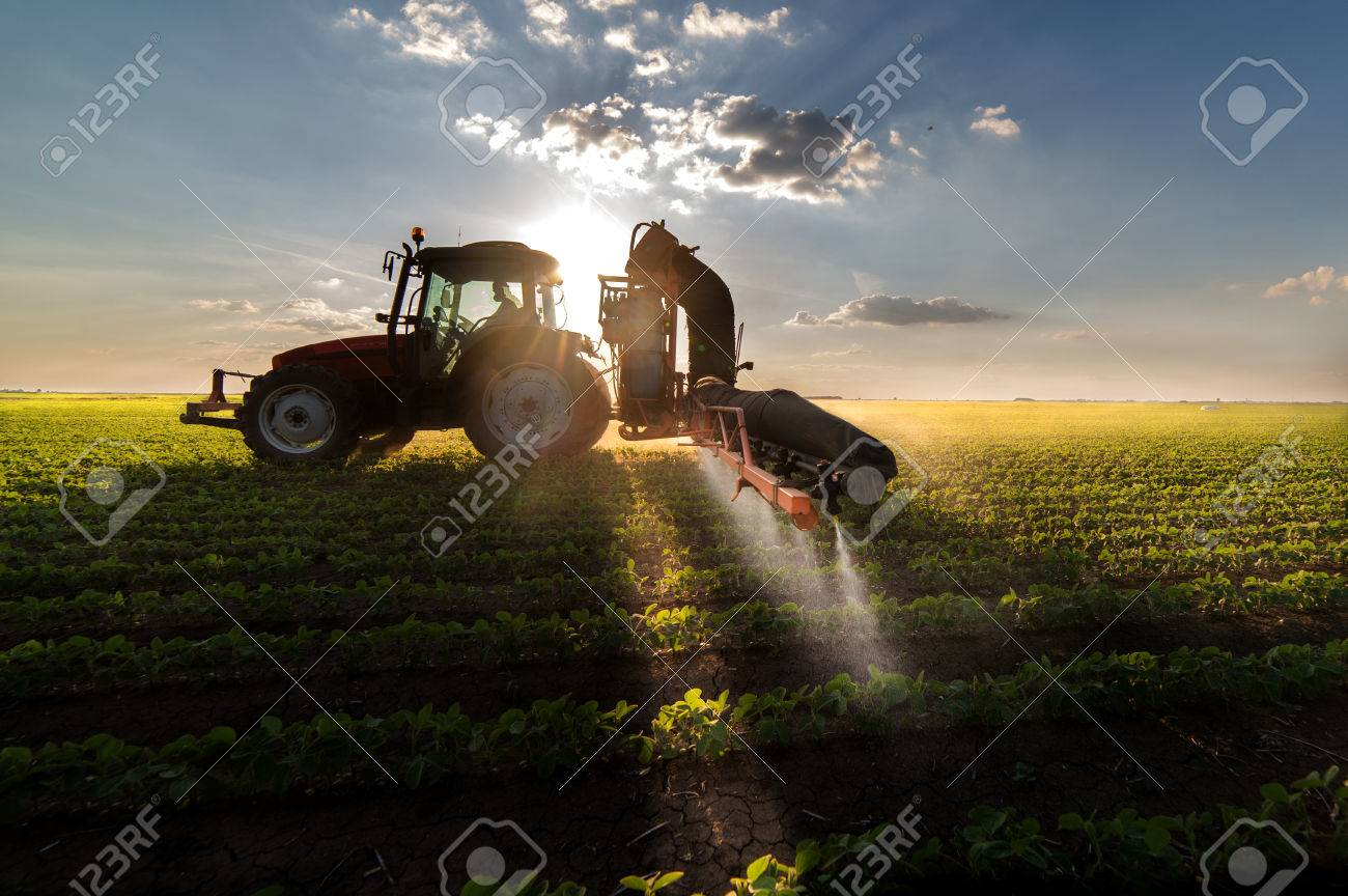 Tractor spraying pesticides on soybean field with sprayer at spring - 82523712