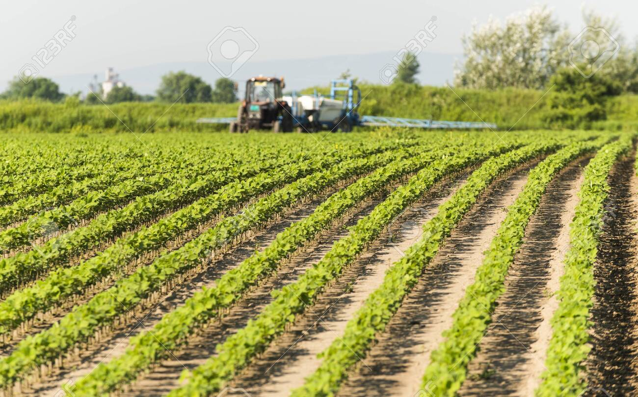 Tractor spraying pesticides on soy field with sprayer at spring - 137955247