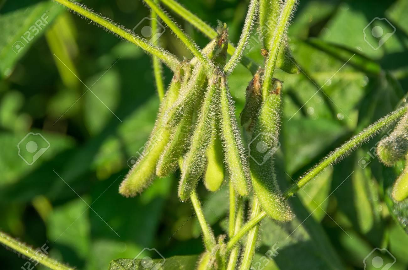 大豆 育て 方