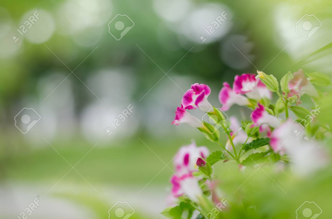 A beautiful wild flowers in the garden stock photo picture and a beautiful wild flowers in the garden stock photo 45628612 izmirmasajfo