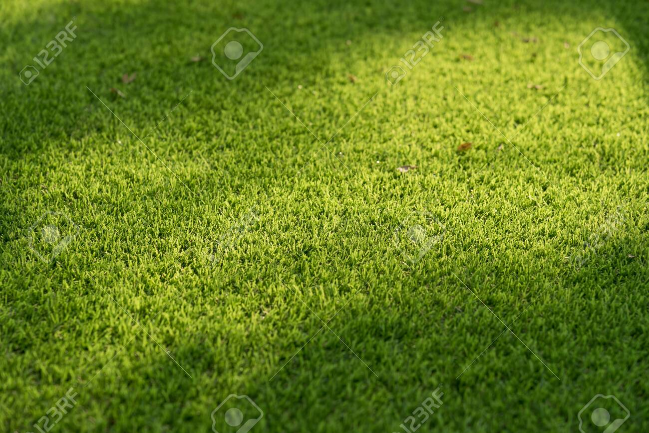 Light and shadow on green grass. - 131765280