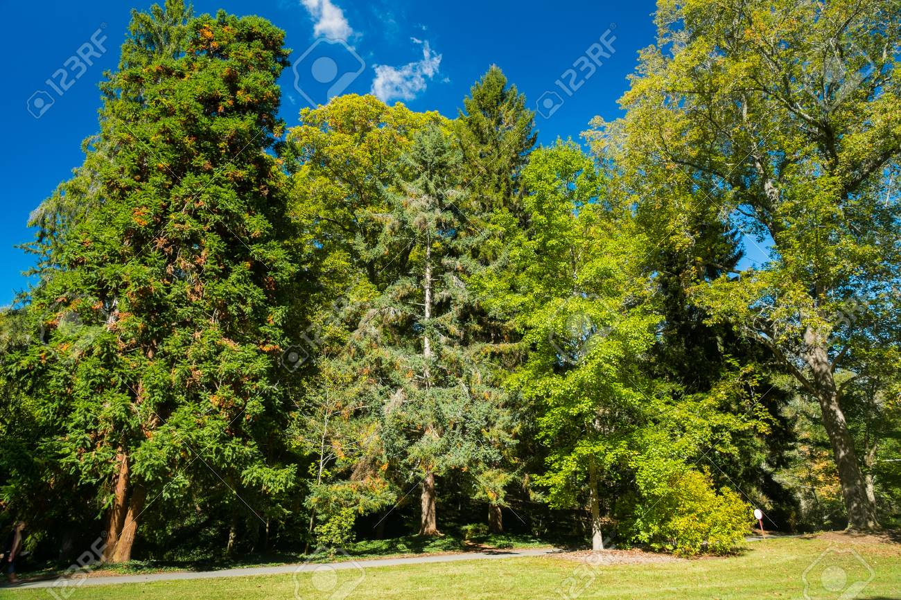 Scenic View Of A Forest With Tall Trees And Lush Landscape With ...