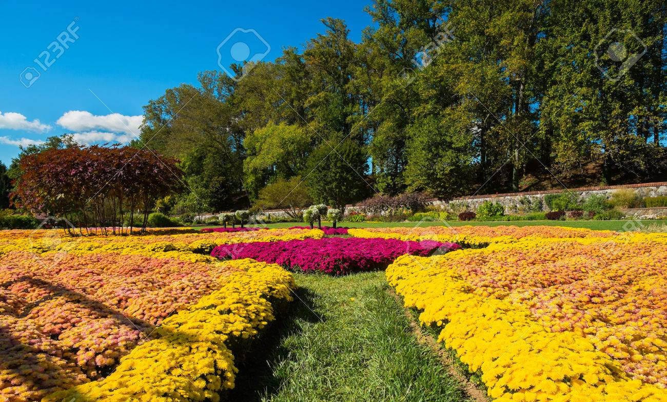 ASHEVILLE, NORTH CAROLINA OCTOBER 11: The Biltmore House And Gardens, A  Popular Tourist