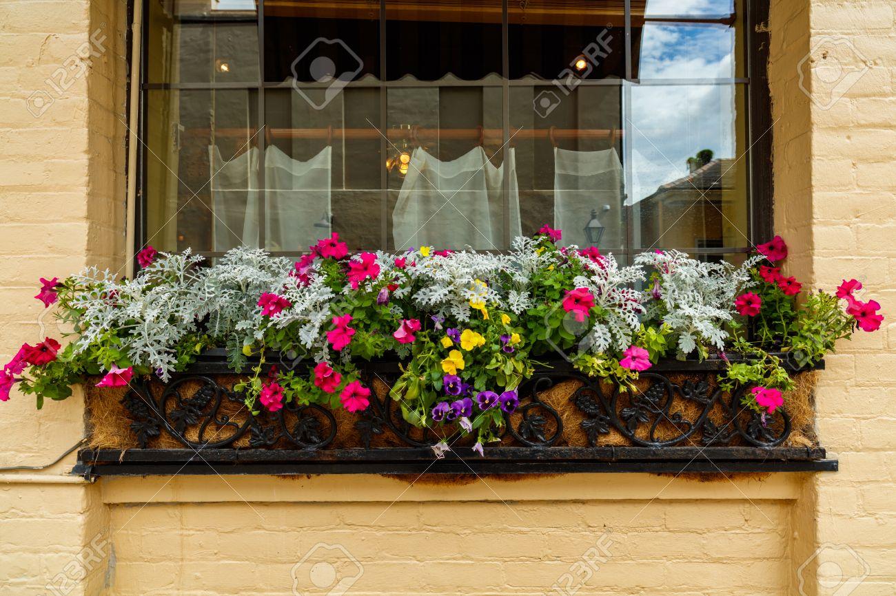 Pretty flowers and plants outside a vintage french quarter building pretty flowers and plants outside a vintage french quarter building in new orleans louisiana mightylinksfo
