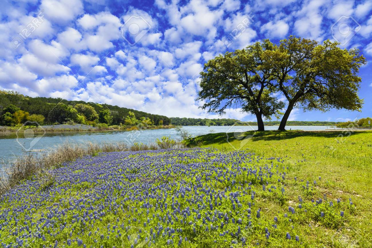 Scenic Texas Hill Country Landscape With Blooming Bluebonnets Stock Photo Picture And Royalty Free Image Image 110299555
