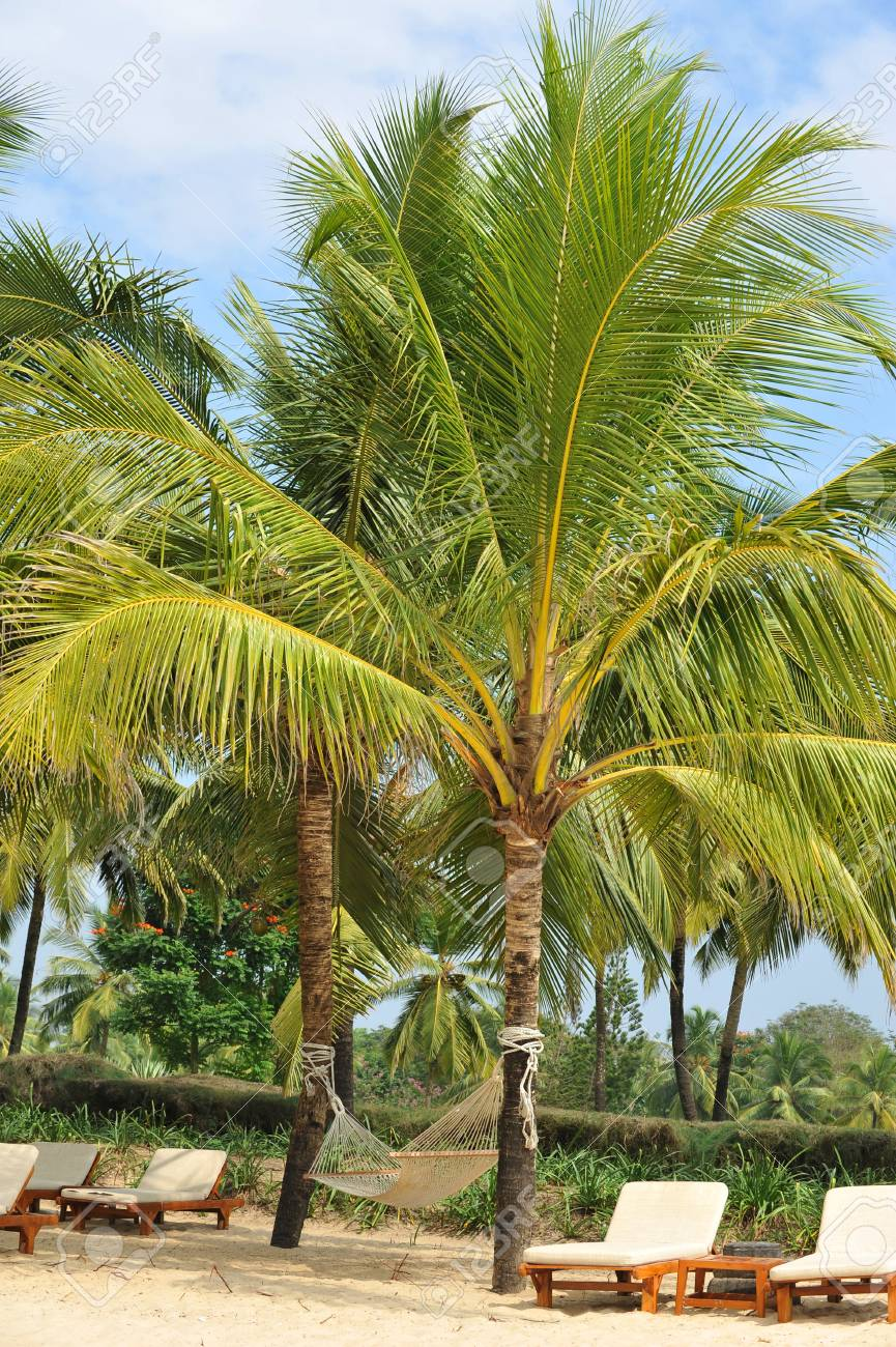 photo landscape of palm trees and beach in Goa Stock Photo - 17899880