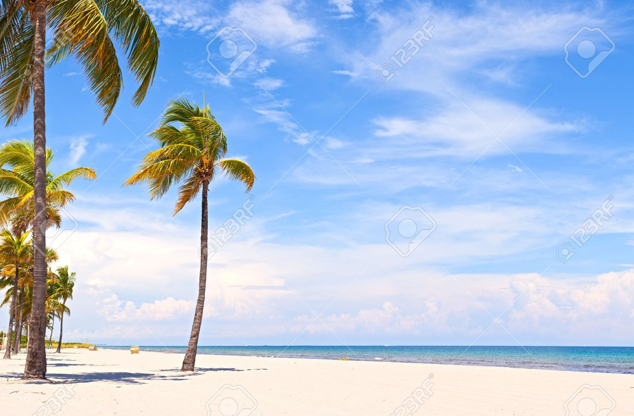 Palm Trees On A Beautiful Sunny Summer Afternoon In Hollywood Beach Near Miami Florida With Ocean