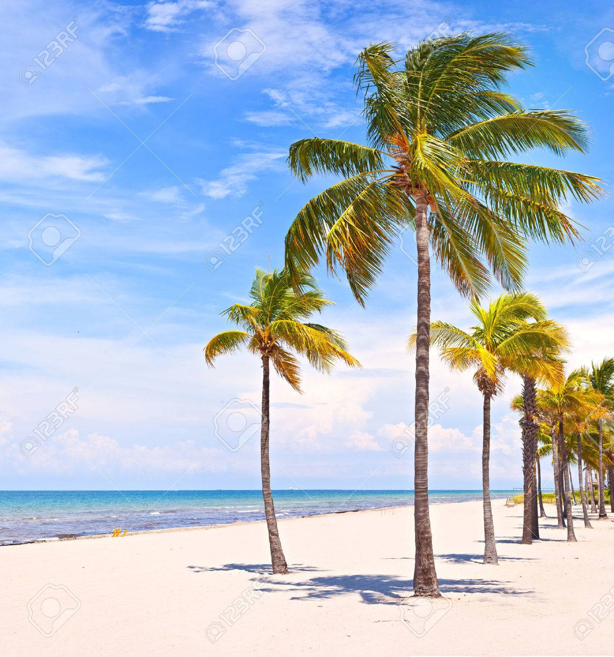Palm Trees On A Beautiful Sunny Summer Afternoon In Miami Beach Florida With Ocean And Blue