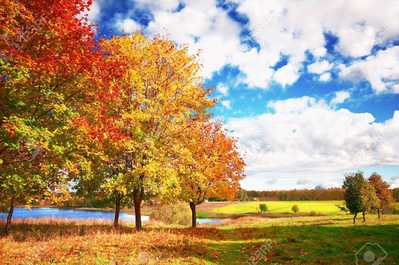 autumn landscape - 48955092