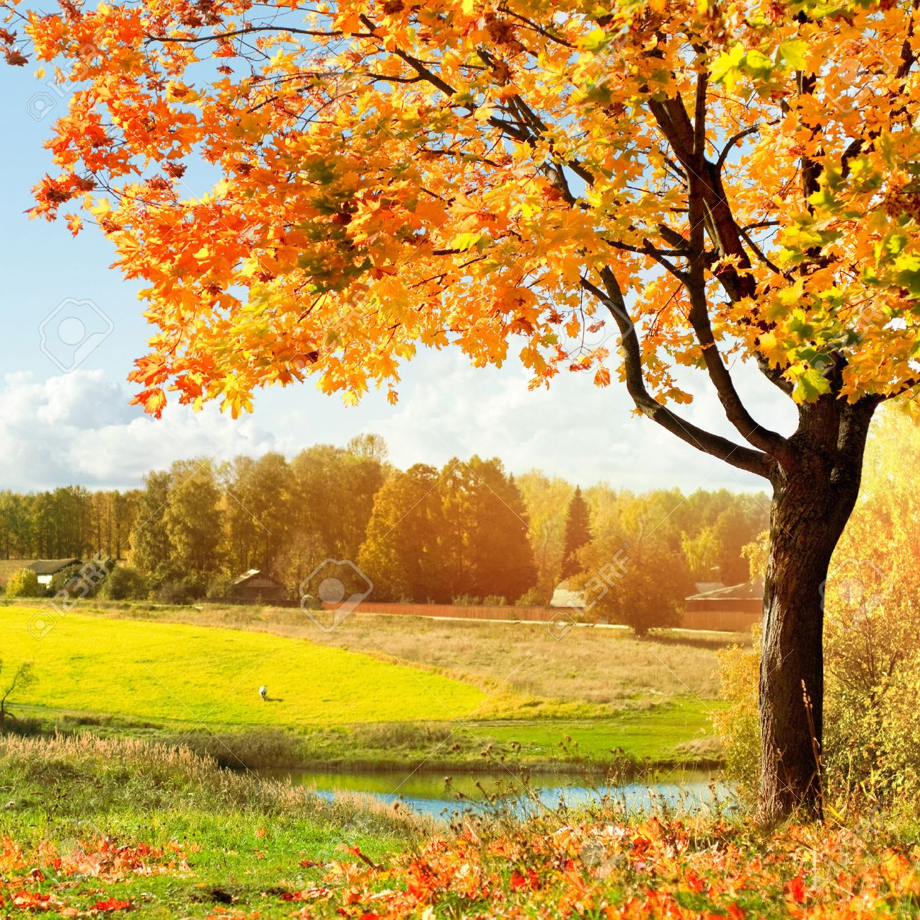 autumn landscape Stock Photo - 48955167