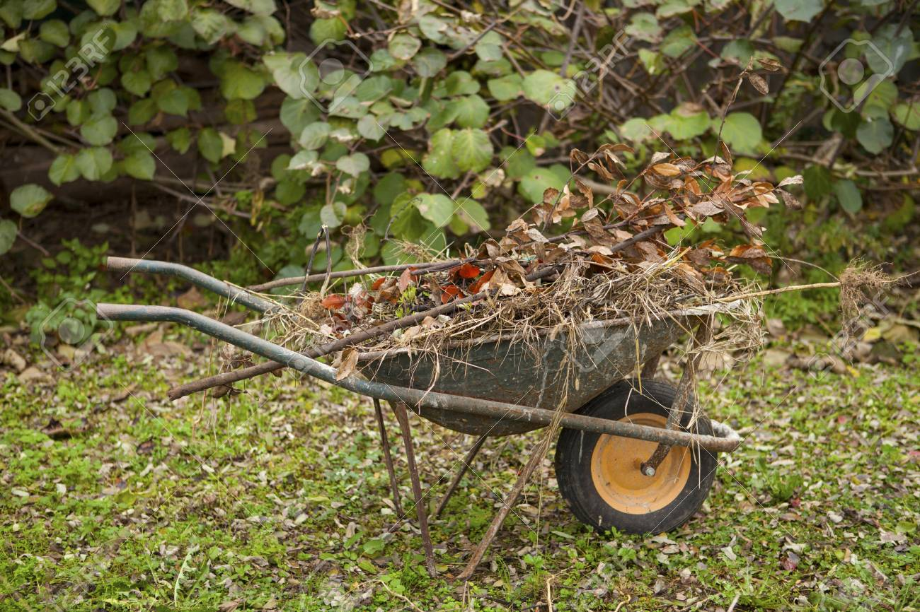 Old Rusty Wheelbarrow In A Autumn Garden Stock Photo, Picture And ...