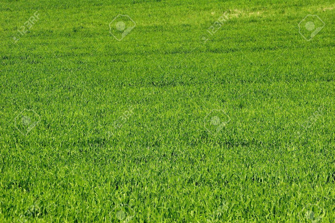 green field Stock Photo - 389076
