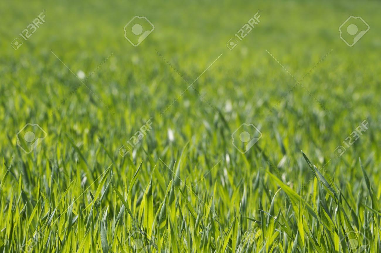 lush green grass background Stock Photo - 9262857