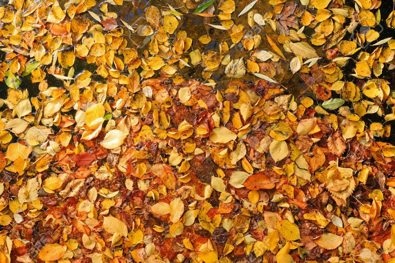 Autumn leaves on water Stock Photo - 22999641