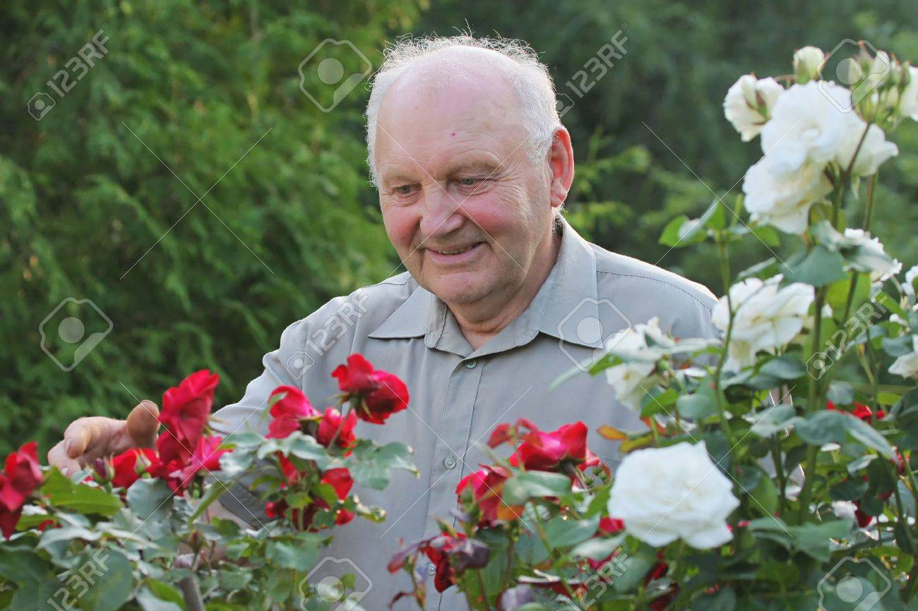 Portrait of old man - grower of roses next to rose bush in his beautiful garden. Stock Photo - 8165795