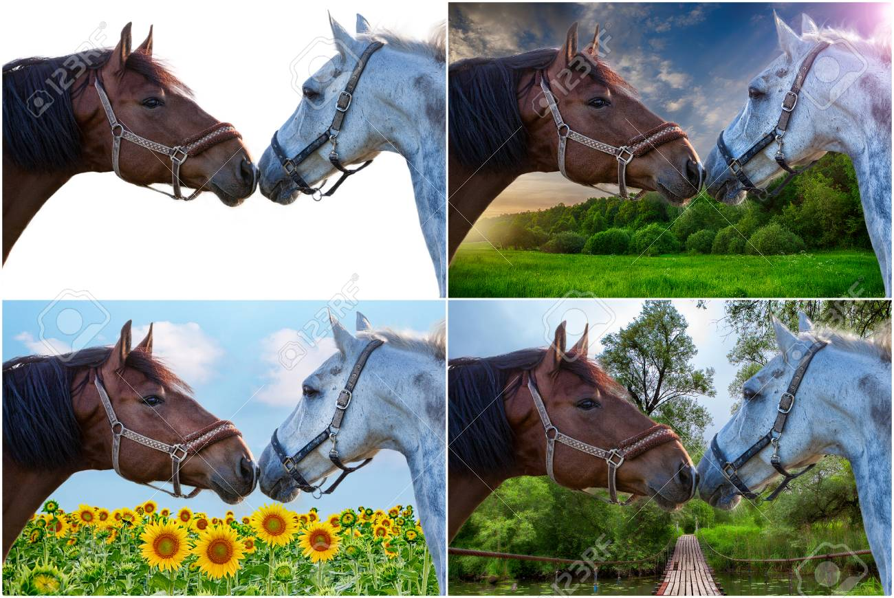 Collage Portrait Of Two Nice Horse At Various Nature Backgrounds Stock Photo Picture And Royalty Free Image Image 65987206