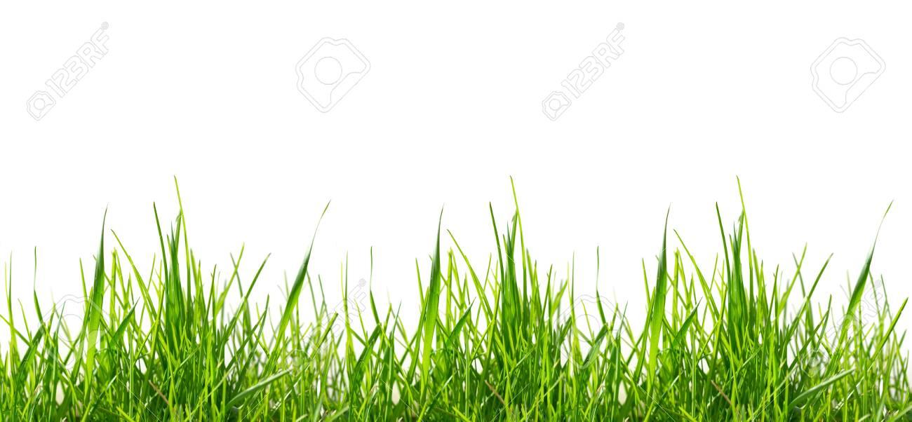 green grass pattern - 2863892