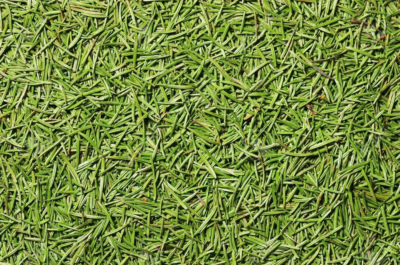 Fir-needle texture - Closeup of fir needles - 3564250