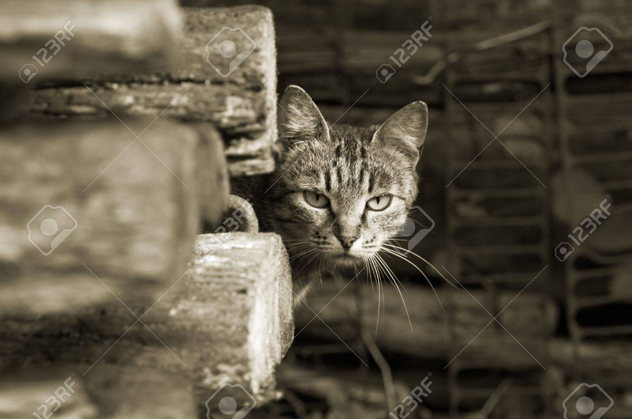 Wary cat - 4857213