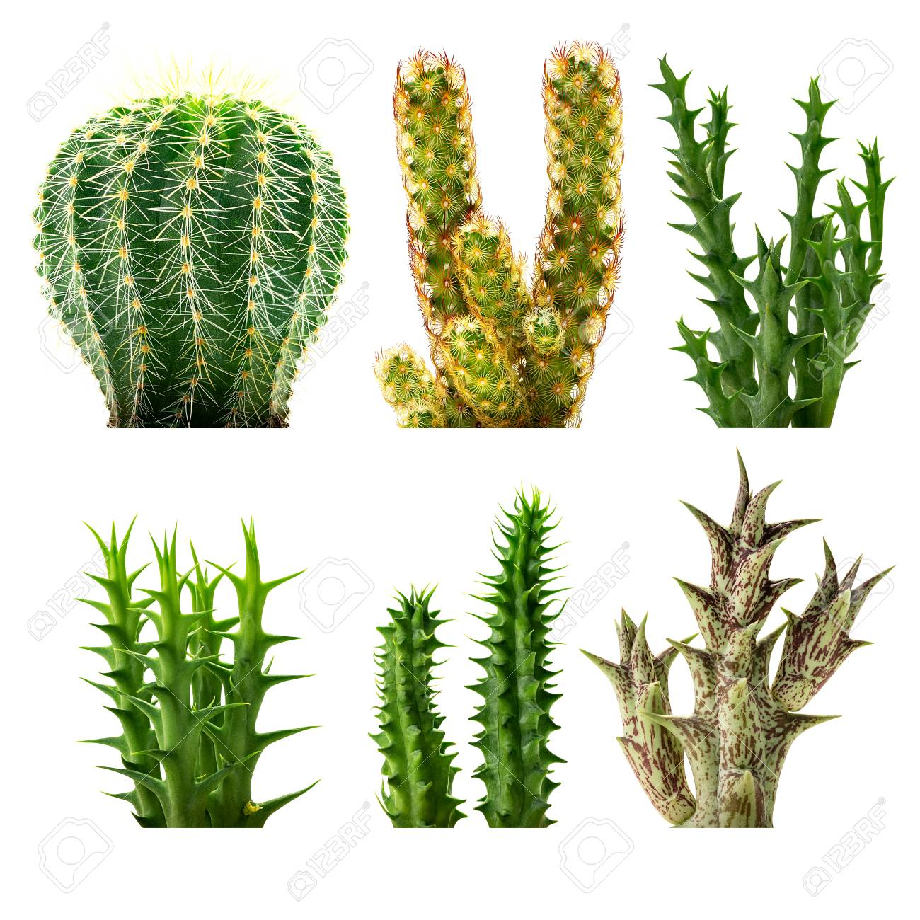 Set Of Desert Plants Isolated On White Background Stock Photo