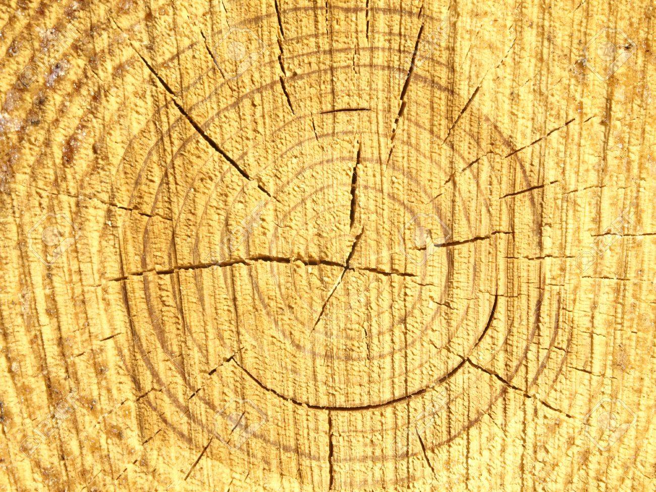 pine wood rings in cut trunks Stock Photo - 8683454