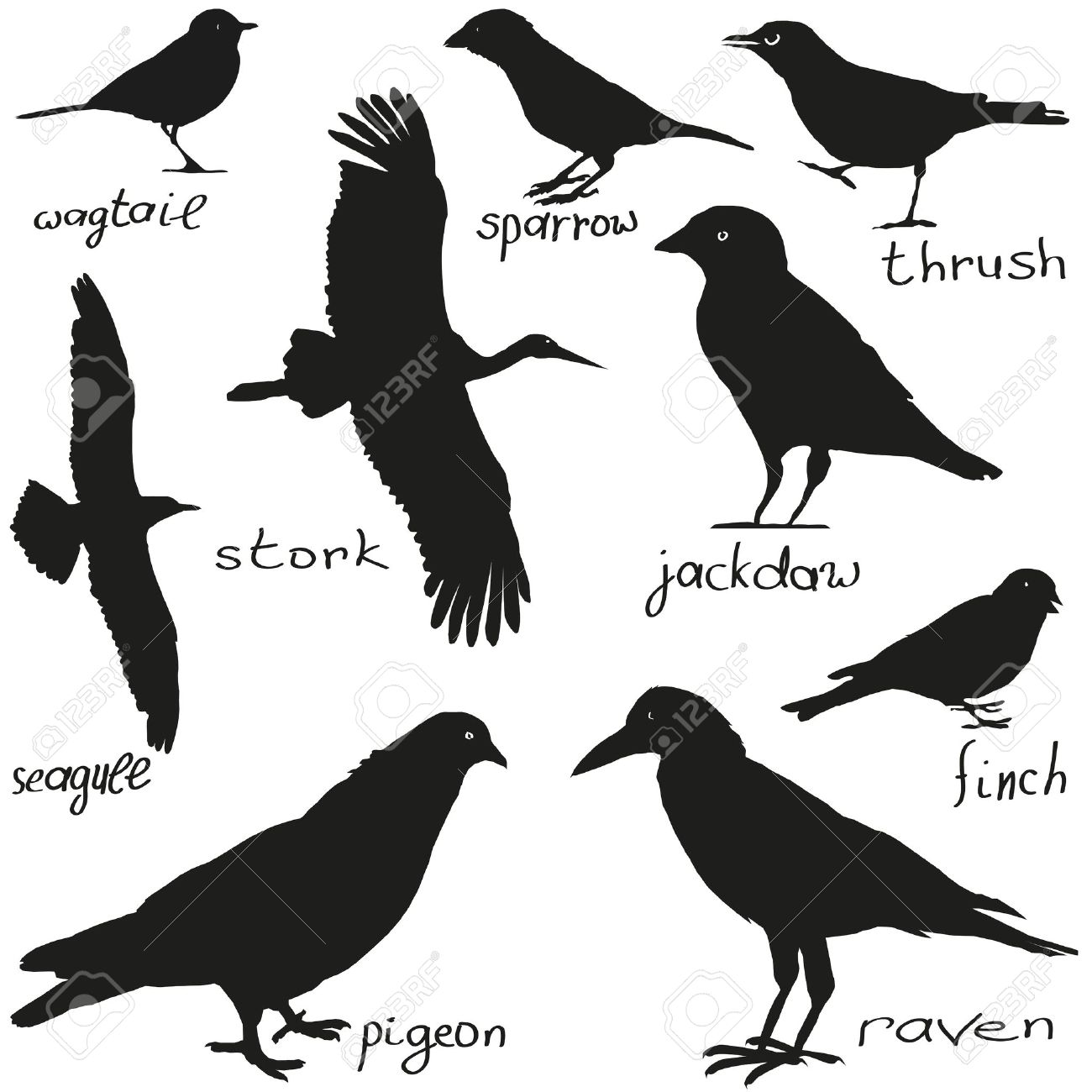 a set of silhouettes of different birds in black royalty free