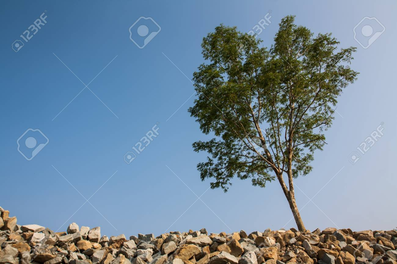 groub of granite rocks construction materials and tree in blue sky background Stock Photo - 15880450