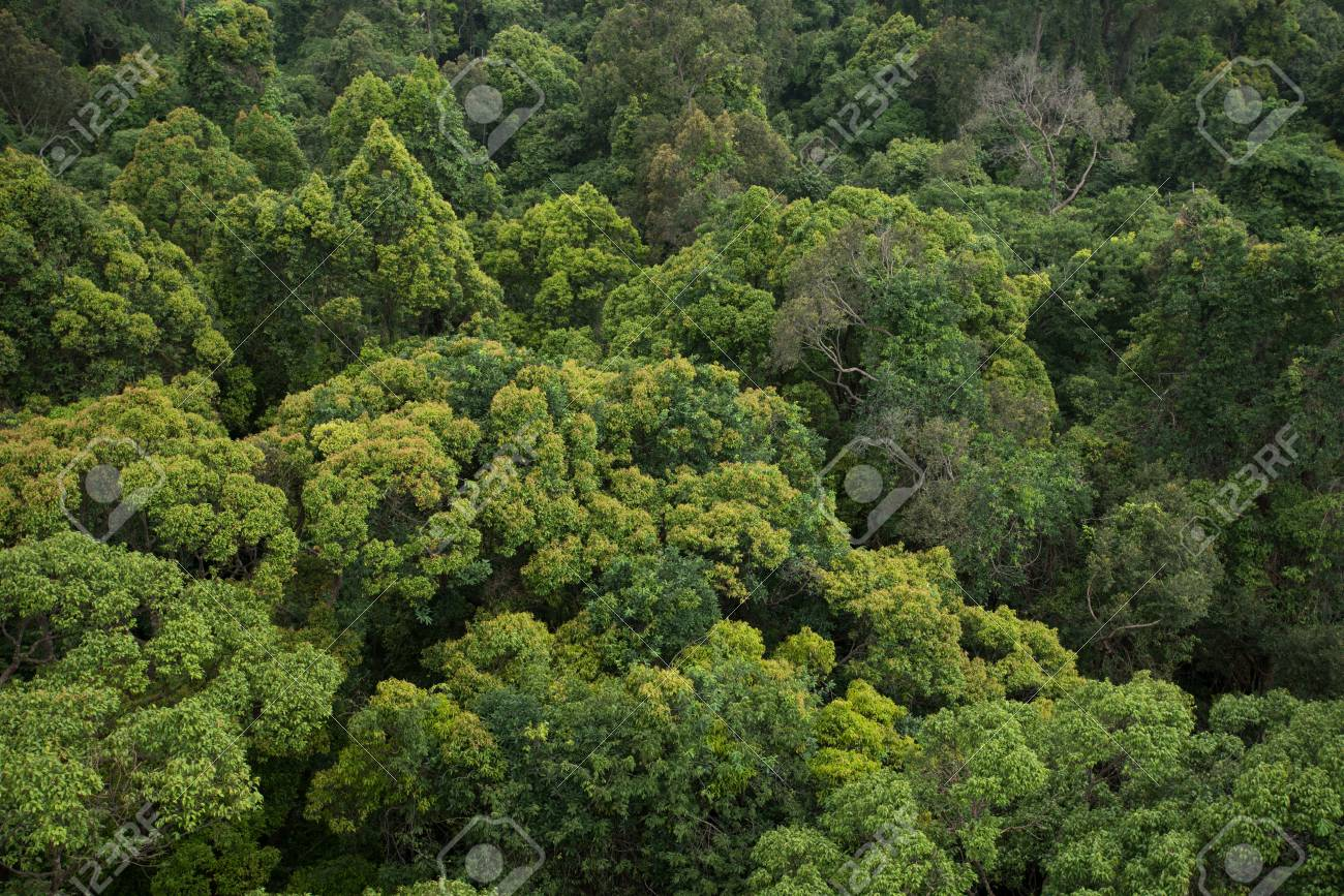 Evergreen Forest It is also known as tropical rainforest. evergreen forest