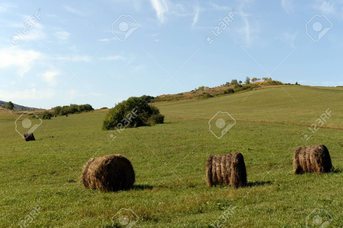Rural landscape with harvested rolls of hay in the foothills of the Altai mountains - 130513939
