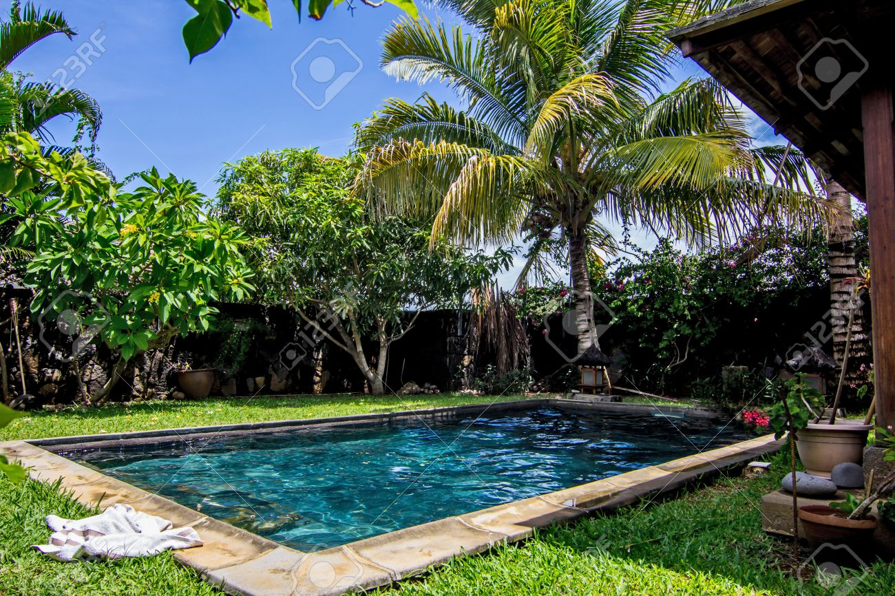 Stock Photo   Swimming Pool And Palm Trees In The Backyard