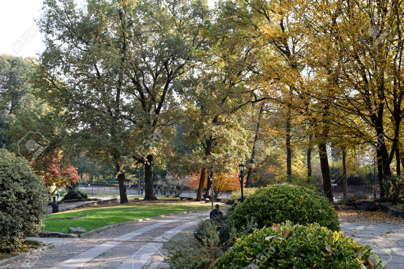 Turin's parks undress and fall in the fall - 88290509