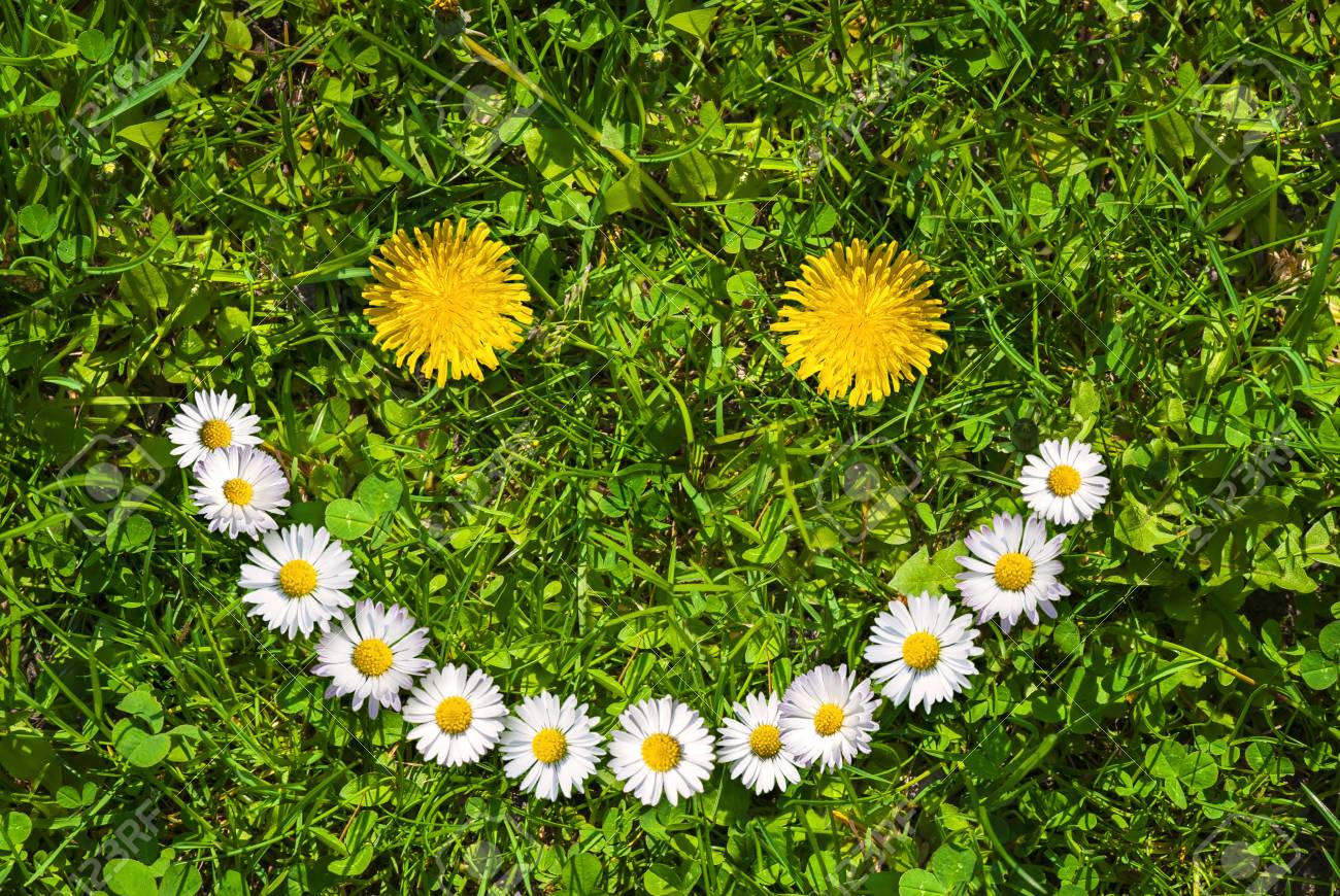 Smiley Face Of Yellow Dandelions And White Daisies On Green Grass.. Stock  Photo, Picture And Royalty Free Image. Image 89047622.